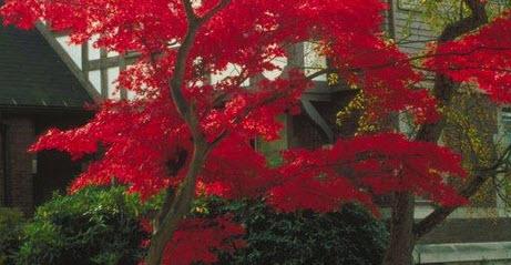 Home Maintenance:  Fall